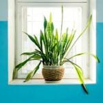 Decoració amb plantes al teu pis de lloguer