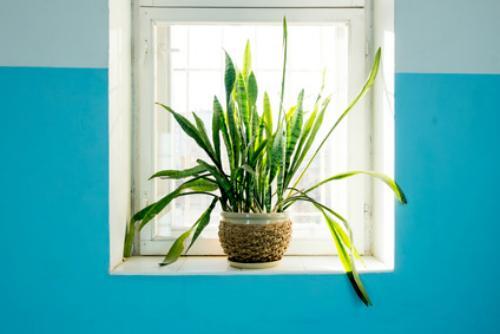 decoració plantes pis de lloguer