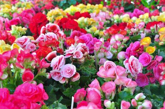 plantes de primavera